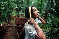 """Índio Werekena morador da comunidade de Anamoim no alto rio Xié carrega um fardo chamado de """" piraíba"""" carregado de fibras de piaçaba(Leopoldínia píassaba Wall). A fibra , um dos principais produtos geradores de renda na região sendo coletada de forma rudimentar. Até hoje é utilizada na fabricação de cordas para embarcações, chapéus, artesanato e principalmente vassouras, que são vendidas em várias regiões do país.<br />Alto rio Xié, fronteira do Brasil com a Venezuela a cerca de 1.000Km oeste de Manaus.<br />06/06/2002.<br />©Foto: Paulo Santos/Interfoto<br />Negativo Cor 135 Nº 8326 T3 F12 Expedição Werekena do Xié<br /> <br /> Os índios Baré e Werekena (ou Warekena) vivem principalmente ao longo do Rio Xié e alto curso do Rio Negro, para onde grande parte deles migrou compulsoriamente em razão do contato com os não-índios, cuja história foi marcada pela violência e a exploração do trabalho extrativista. Oriundos da família lingüística aruak, hoje falam uma língua franca, o nheengatu, difundida pelos carmelitas no período colonial. Integram a área cultural conhecida como Noroeste Amazônico. (ISA)"""