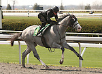 07 April 2011.  Hip #9 Unbridled's Song - Lost In The Storm colt consigned by Niall Brennan Stables.