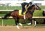 April 21, 2014 Commanding Curve and rider Emerson Chavez gallop at Churchill Downs.  He is trained by Dallas Stewart and owned by West Point Thoroughbreds. He finished third in the Louisiana Derby.
