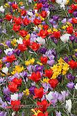 Gisela, FLOWERS, photos+++++,DTGK1992,#f#