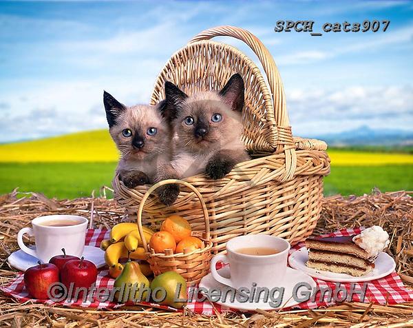 Xavier, ANIMALS, REALISTISCHE TIERE, ANIMALES REALISTICOS, cats, photos+++++,SPCHCATS907,#a#, EVERYDAY