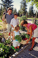 Mother, father and children gathering vegetables in outdoor home garden, California. California.