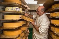 Europe/Allemagne/Bade-Würrtemberg/Forêt Noire/Münstertal: Hans Jorg Fuchs surveille l'affinage de ses fromages de montagne: Bergkäse dans sa fromagerie à l'Hôtel  Spielweg