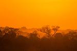 Miombo woodland at sunrise, Kafue National Park, Zambia