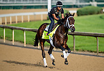 LOUISVILLE, KY - MAY 02: Outwork, trained by Todd Pletcher and owned by Repole Stable, exercises and prepares during morning workouts for the Kentucky Derby and Kentucky Oaks at Churchill Downs on May 2, 2016 in Louisville, Kentucky. (photo by Scott Serio/Eclipse Sportswire/Getty Images)