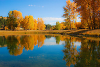 Tobacco River pond with golden cottonwoods and aspen reflecting in the still water