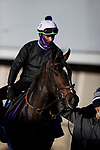 November 3, 2020: Rushing Fall, trained by trainer Chad C. Brown, exercises in preparation for the Breeders' Cup Filly & Mare Turf at  Keeneland Racetrack in Lexington, Kentucky on November 3, 2020. Alex Evers/Eclipse Sportswire/Breeders Cup