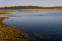 Nisqually River delta/estuary,  Billy Frank Jr. Nisqually National Wildlife Refuge and Mount Rainier, WA.  July.  Evening at high tide.
