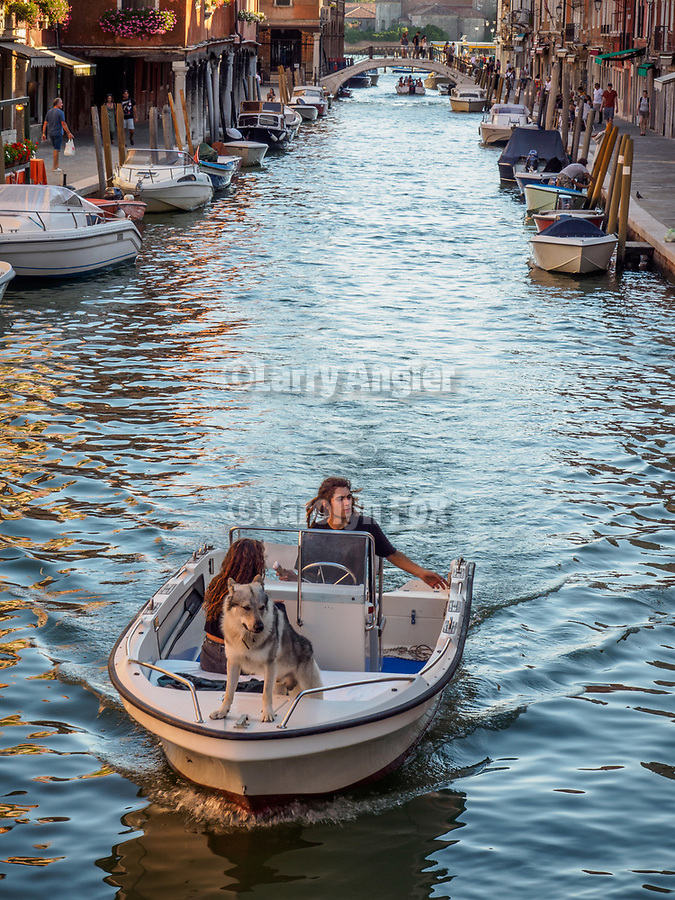 A boat with dog travels along Fondamenta dei Vetrai on the main canal of Murano, Italy