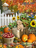 Lori, REALISTIC ANIMALS, REALISTISCHE TIERE, ANIMALES REALISTICOS, zeich, paintings+++++Harvest Puppy_2_72,USLS209,#a#, EVERYDAY ,puzzle,puzzles