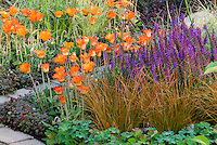 Carex ornamental grass, Arctotis orange flowers, Salvia purple flowers, Rubus, for an orange and purple theme color garden border combination