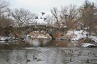 NOVA YORK, EUA, 12.02.2019 - CENA-EUA  - Aves são vistas voando sobre um lago no Central Park em Nova York nos Estados Unidos nesta terça-feira, 12. (Foto: William Volcov/Brazil Photo Press)