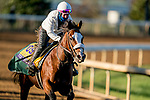 November 4, 2020: Tiz The Law, trained by trainer Barclay Tagg, exercises in preparation for the Breeders' Cup Classic at Keeneland Racetrack in Lexington, Kentucky on November 4, 2020. Scott Serio/Eclipse Sportswire/Breeders Cup