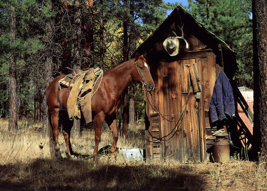 A horse waits patiently outside the door of an outhouse.