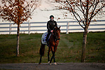 November 2, 2020: Mighty Gurkha, trained by trainer Archie Watson, exercises in preparation for the Breeders' Cup Juvenile Turf Sprint at Keeneland Racetrack in Lexington, Kentucky on November 2, 2020. Alex Evers/Eclipse Sportswire/Breeders Cup