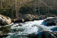 Winter along Middle Prong of Little Pigeon River, Greenbrier
