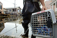 "A cat rescued from a house at 316 S Alexander St., New Orleans, looks out of his ""Pet Taxi"" as he is carried through the flooded streets of New orleans by an animal rescuer from Pasado's Safe Haven.  © Karen Ducey"