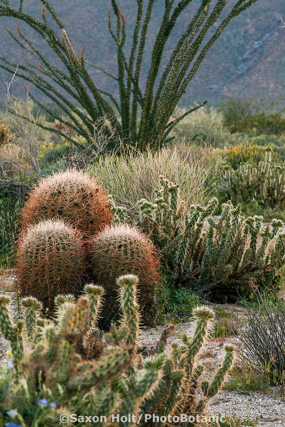 California native plant Anza Borrego State Park