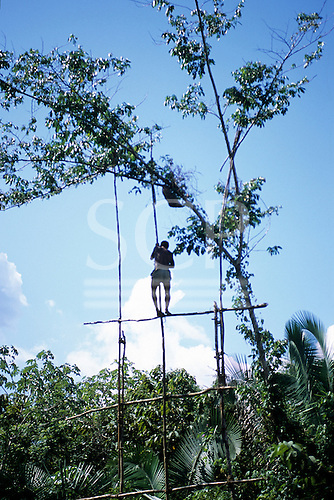 Bacaja village, Amazon, Brazil. Young man climbing up to a hornets' nest. Traditional initiation ceremony; Xicrin tribe.