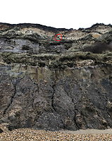 BNPS.co.uk (01202 558833)<br /> Pic: JamesFanton/BNPS<br /> <br /> Where's Tia? - The unfortunate pooch stuck on a ledge.<br /> <br /> A dog that plummeted 50ft off a cliff while chasing a bird has had a miracle escape after emerging from the ordeal unscathed.<br /> <br /> Tia, a Staffordshire Bull Terrier, had to be rescued after tumbling over the edge of the 120ft cliff at Hengistbury Head in Bournemouth, Dorset.<br /> <br /> She landed on a ledge unharmed, much to the relief of her owner Michelle Senjack who watched helplessly from the top.