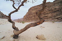 Coloured Canyon, Nuweiba, Red Sea, Egypt, Oktober 1997
