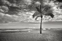 Palm tree and ocean on the Kohala Coast. The Big Island, Hawaii.
