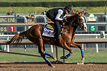 ARCADIA, CA  OCTOBER 30: Breeders' Cup Dirt Mile entrant Improbable, trained by Bob Baffert,  exercises in preparation for the Breeders' Cup World Championships at Santa Anita Park in Arcadia, California on October 30, 2019.  (Photo by Casey Phillips/Eclipse Sportswire/CSM)