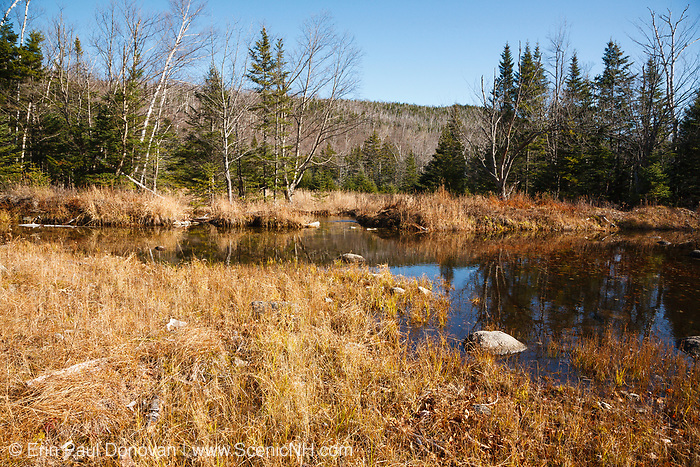 """Wetlands area along Flat Mountain Pond Trail in Waterville Valley, New Hampshire. This trail follows the old Beebe River Railroad (1917-1942), and this area was referred to as the """"Horseshoe"""", which was a very sharp turn along the railroad near logging Camp 9."""