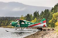 Float plane on Naknek lake, Brown bear sow with cubs walk the shore, Katmai National Park, Alaska.