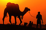 An owner leads his camel across the Thar Desert near the town of Pushkar in Rajasthan, India, during a glorious orange sunset.<br /> <br /> The owner was leading the camel in for the night following a day of camel safari trips with daytime temperatures reaching 30c.<br /> <br /> The sight was captured by freelance photojournalist Himanshu Sharma, 32, from Ajmer, India<br /> <br /> Please byline: Himanshu Sharma/Solent News<br /> <br /> © Himanshu Sharma/Solent News & Photo Agency<br /> UK +44 (0) 2380 458800