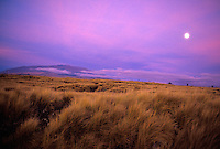 Moon rising over Mauna Loa, aky has a purple tinge