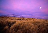 Moon rising over Mauna Loa, aky has a purple tinge
