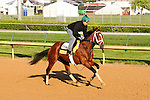 28 April 2010: Discreetly Mine gallops at Churchill Downs, Louisville, KY.