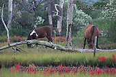 Bob, ANIMALS, REALISTISCHE TIERE, ANIMALES REALISTICOS, horses, photos+++++,GBLA4449,#a#, EVERYDAY