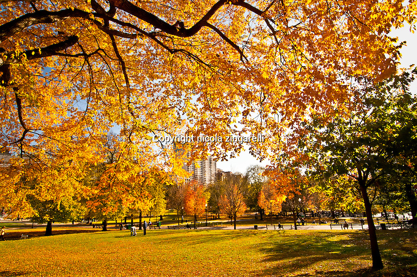 Beautiful yellow trees on a sunny day at the Boston Commons park in Boston
