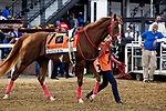 MAY 15, 2021: France Go de Ina before the Preakness Stakes at Pimlico Racecourse in Baltimore, Maryland on May 15, 2021. EversEclipse Sportswire/CSM