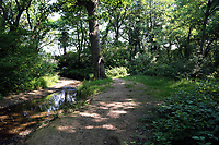 Tuesday 20 June 2017<br /> Pictured: The wooded area behind the house of Darren Osborne in the Pentwyn area of  Cardiff, Wales, UK<br /> Re: The man who drove the vehicle which drove into worshippers near a north London mosque has been named as Darren Osborne from Cardiff, South Wales
