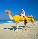 United Arab Emirates, Dubai: Camels & Rider on Beach | Vereinigte Arabische Emirate, Dubai: Dromedar reiten am Strand