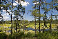 Mullica River, Wharton State Forest, Pine Barrens, New Jersey