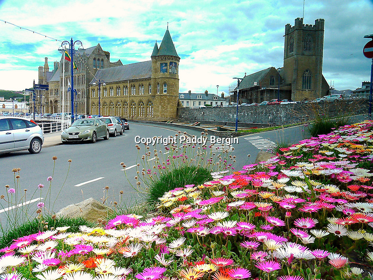 These very colourful Asters were planted up by the Council on the sea front in Aberystwyth, Ceredigion, West Wales.<br /> <br /> Stock Photo by Paddy Bergin
