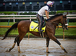 September 2, 2020:  Tiz the Law exercises as horses prepare for the 2020 Kentucky Derby and Kentucky Oaks at Churchill Downs in Louisville, Kentucky. The race is being run without fans due to the coronavirus pandemic that has gripped the world and nation for much of the year. Evers/Eclipse Sportswire/CSM