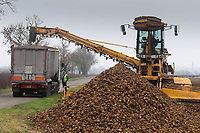 2-3-2021 Haulage contractors using a Euro Maus to load lorry with sugar beet.<br />  ©Tim Scrivener Photographer 07850 303986<br />      ....Covering Agriculture In The UK....