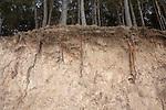 Tree Root Erosion, Lori Province