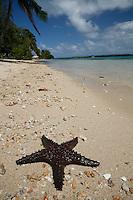 Starfish on the Beach in Tonga
