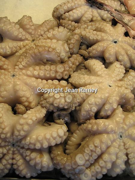 Octopus - Polpo