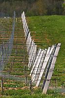 vineyard wires and end posts chateau pey la tour bordeaux france