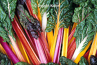 HS80-008z  Bright Lights Swiss Chard or Multicolor Chard