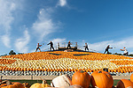 FRIDAY 9TH OCTOBER 2020<br /> <br /> Pictured: Workers at Sunnyfields Farm in Totton, Hants form a socially distanced line as they toss pumpkins to create a giant artwork of a pumpkin doinning a facemask, made up of over 5,000 of the vegetables which goes on display to the public for the first time tomorrow. <br /> <br /> © Jordan Pettitt/Solent News & Photo Agency<br /> UK +44 (0) 2380 458800