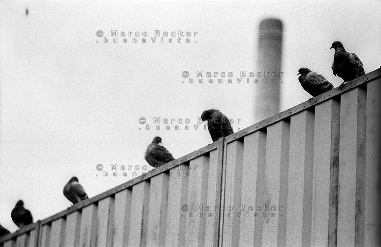 milano, piccioni e una vecchia ciminiera --- milan, pigeons and an old chimney