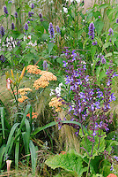 Heirloom and old-fashioned flowers: Salvia with Achillea, Agastache, daylilies Hemerocallis, ornamewntal grass, for blue and orange color theme garden perennials plantings
